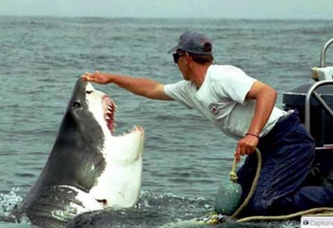 Και οι καρχαρίες έχουν ψυχή!