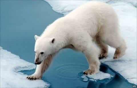 Η πολική αρκούδα εξαφανίζεται