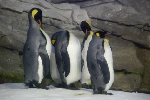 Πιγκουίνοι στη Βουλγαρία