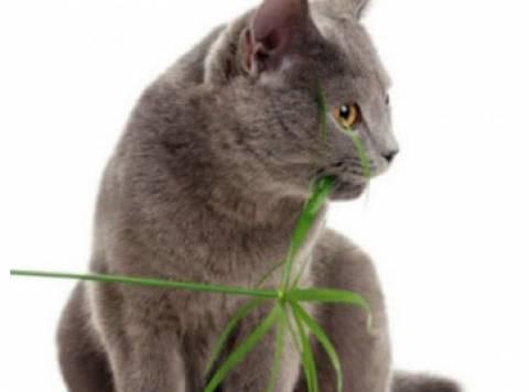 Πώς θα απομακρύνετε τη γάτα σας από τις γλάστρες