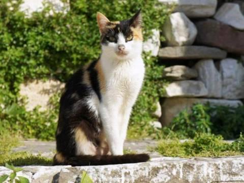 Στην Πάρο το ANIMAL PLANET για τη Γάτα του Αιγαίου