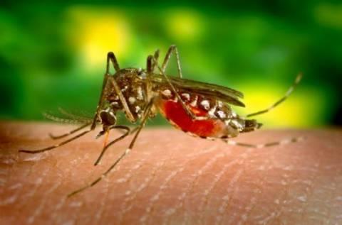 Κινητοποίηση για το κρούσμα του ιού του Δ. Νείλου
