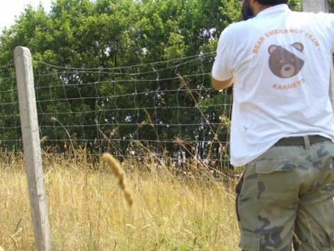 Εγνατία Οδός: Καρμανιόλα για τις αρκούδες