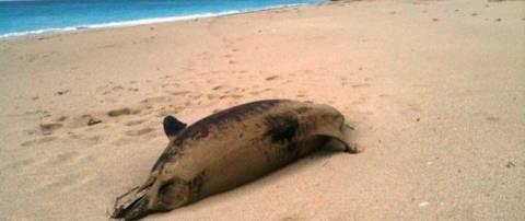 Ανησυχία για νεκρά δελφίνια και χελώνες