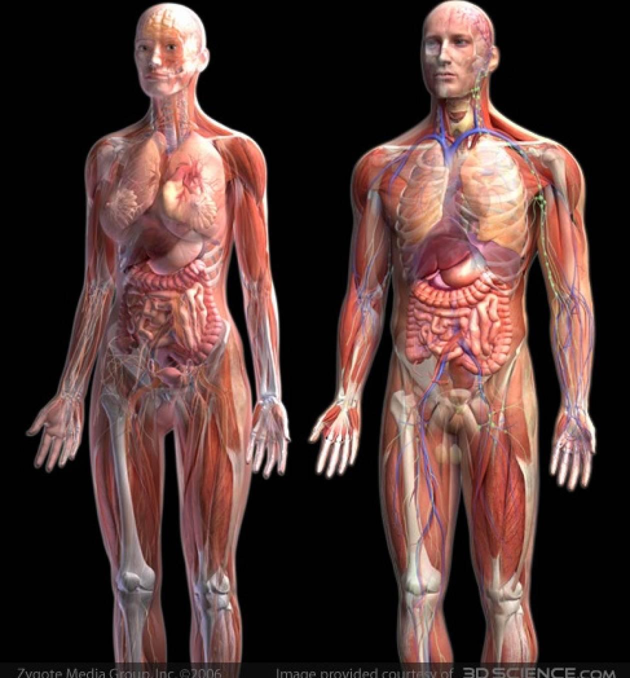 Εξερευνείστε το ανθρώπινο σώμα - Newsbomb