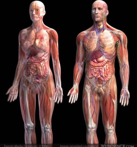 Εξερευνείστε το ανθρώπινο σώμα