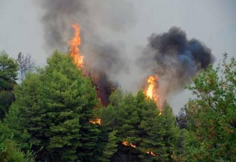 Προσωπικό ενδιαφέρον Σαμαρά για τις πυρκαγιές
