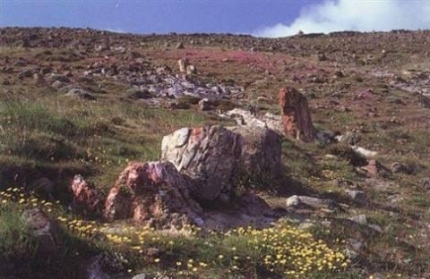 «Αποψίλωσαν» το απολιθωμένο δάσος της Μυτιλήνης
