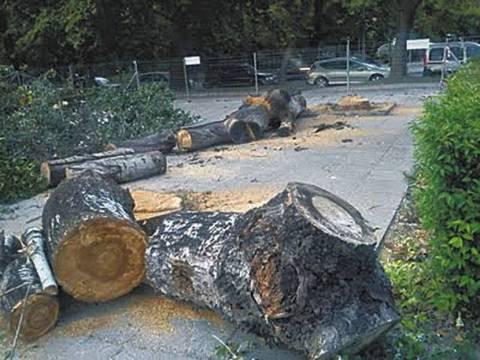Έκοψαν 703 δέντρα για να αναπλάσουν την παραλία