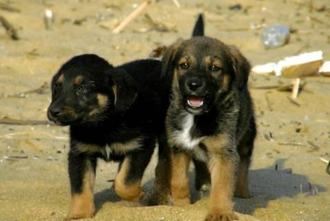 Κρεματόριο σκύλων στο Ηράκλειο Κρήτης!