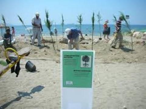 Θεσσαλονίκη: Εθελοντές καθάρισαν την παραλία Σοφούλη
