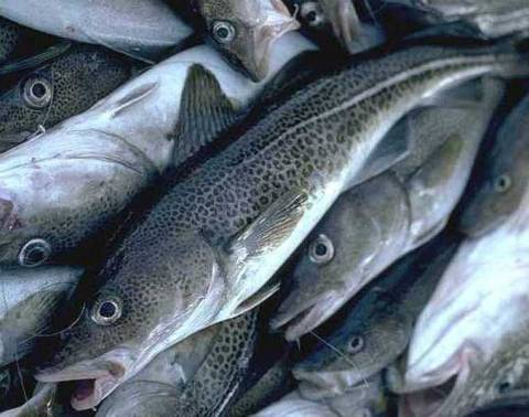Κατάσχεση αλιευμάτων στη Ν. Μηχανιώνα