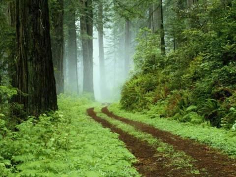 Φροντίδα για τα δάση της Β. Ελλάδος