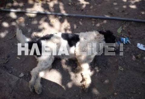 Νέο σοκαριστικό περιστατικό δηλητηρίασης σκυλιών!