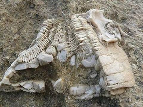 Απολίθωμα πέντε εκατομμυρίων ετών