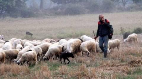 Κραυγή αγωνίας από τους κτηνοτρόφους Σάμου και Ικαρίας