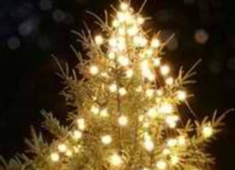Στην Πόμπια στολίζουν, το μεγαλύτερο φυσικό χριστουγεννιάτικο δέντρο