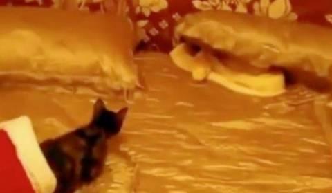 Ψυχοπαθής Βρετανός τάισε τον πύθωνα με ένα ζωντανό γατάκι
