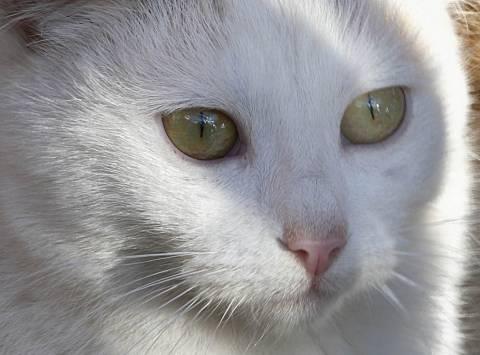 Αρχαία Ολυμπία: «Φιλόζωοι» φαρμάκωσαν πάνω από 40 γάτες
