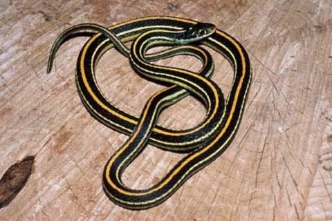 Φίδια, χελώνες και βατράχια σε δωμάτιο ξενοδοχείου