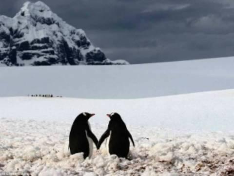 Σαν ερωτευμένοι πιγκουίνοι...