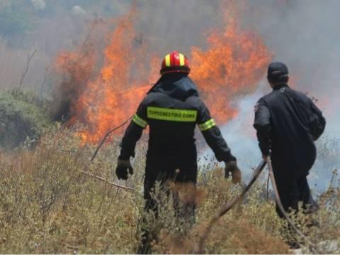 Φωτιά σε δασική έκταση στο Πήλιο
