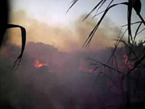 Πυρκαγιά κοντά σε νεκροταφείο του Αγίου Νικολάου