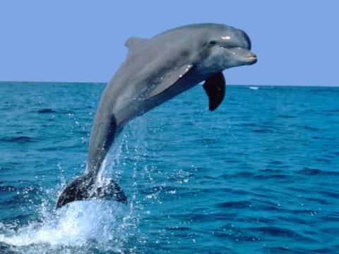 Προβληματίζουν οι θάνατοι θαλάσσιων θηλαστικών στο Ιόνιο