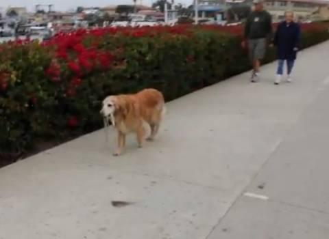 Ένας ανεξάρτητος σκύλος