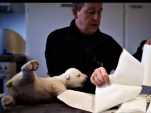 Η ορφανή πολική αρκουδίτσα σε νέες περιπέτειες
