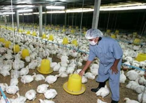 Ξανά στο προσκήνιο η γρίπη των πτηνών