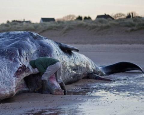 Πουλούσε δόντια και κόκαλα φάλαινας στο Facebook