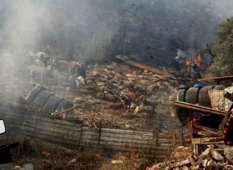 Παρανάλωμα του πυρός στάβλος στην Ημαθία