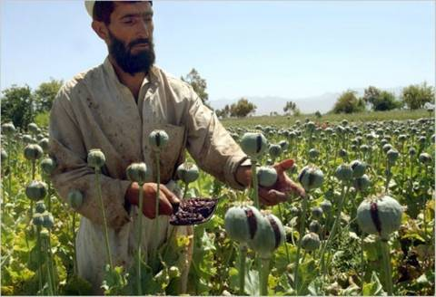 Σημαντικό το όπιο για την οικονομία του Αφγανιστάν