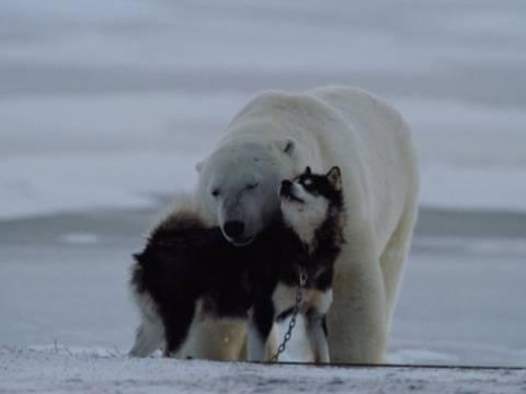 Η ιδιαίτερη φιλία μιας αρκούδας με έναν σκύλο