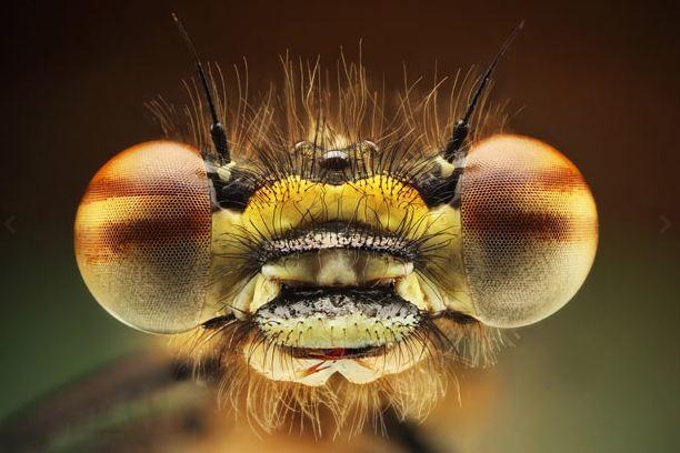 Δείτε έντομα και αράχνες από κοντινή απόσταση