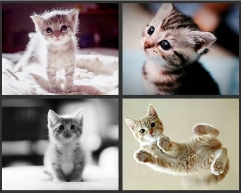 Οι πιο γλυκές φωτογραφίες με νεογέννητα γατάκια!