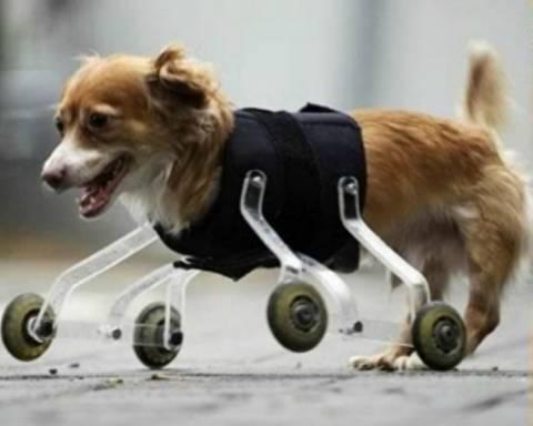 Mάθημα ζωής ανάπηρου σκύλου κάνει το γύρο του Facebook