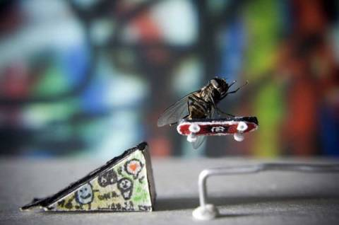 Το 24ωρο μιας μύγας