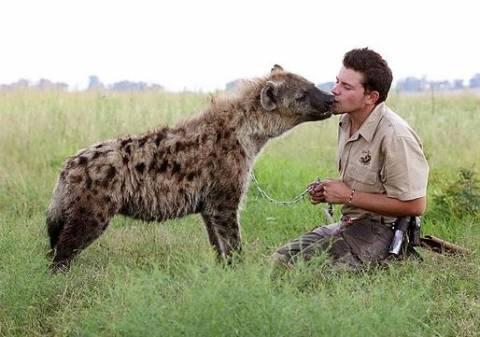 Κάνει παρέα με μια ύαινα!