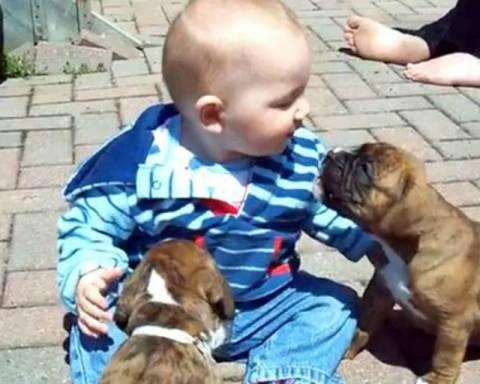 Μωράκι προσπαθεί να «δαγκώσει» κουταβάκια!