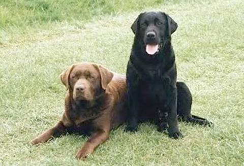 Κιλκίς: Σκότωσε με καραμπίνα τρία σκυλιά