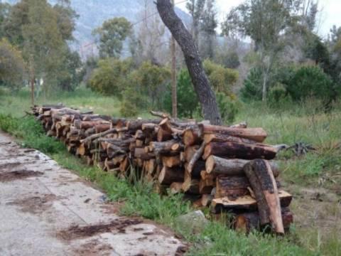 Έκοβαν τα δέντρα για καυσόξυλα…