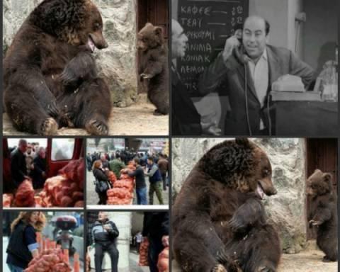 Η μαμά αρκούδα, ο Βέγγος και το κίνημα της πατάτας