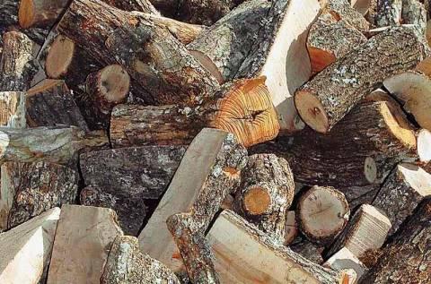 Μετέφεραν παράνομα κορμούς δέντρων
