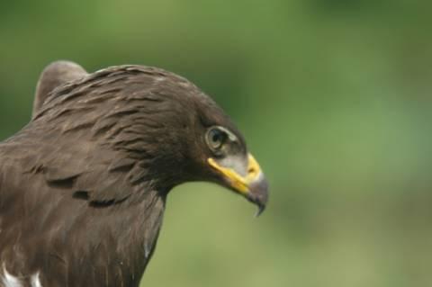 Μαζική δηλητηρίαση αρπακτικών πουλιών