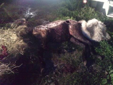 Συνταξιούχος της ΕΥΠ κακοποίησε άγρια άλογο!