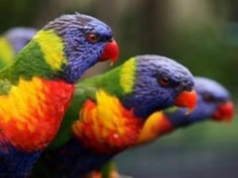 Απίθανος διάλογος μεταξύ παπαγάλων!