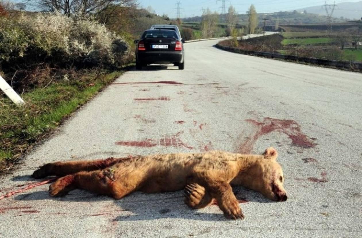 Θύμα τροχαίου αρκουδάκι 1 έτους