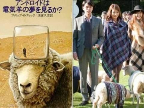 Το πρώτο ξενοδοχείο για …πρόβατα!